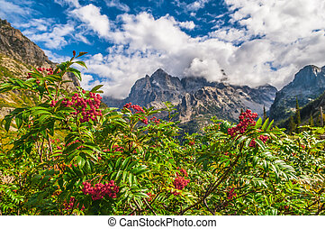 Mountain Ash growing near the hiking trail - Cascade Canyon...