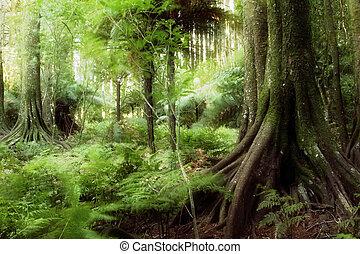 Jungle - New Zealand tropical forest jungle