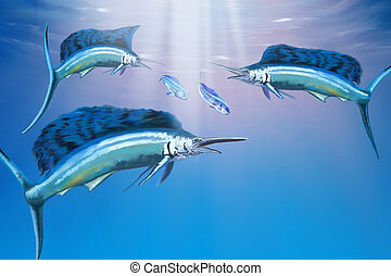 DEEP OCEAN - Three sailfish hunt for their prey.