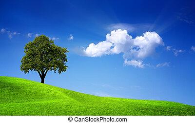 Green oak field