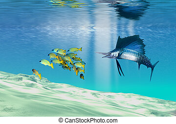 THE REEF - A sailfish hunts prey on a sandy reef.