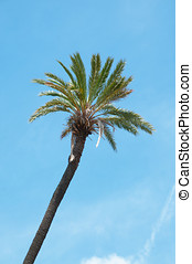Detail of a palm
