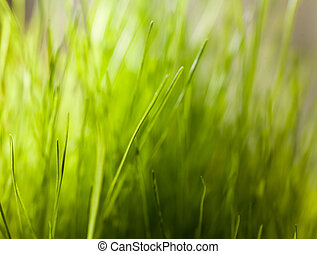 Green grass with dew on a blades. Shallow DOF