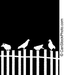 Pigeons on a fence