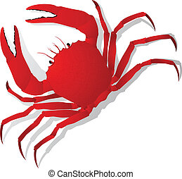 Red crab, isolated objects on white background