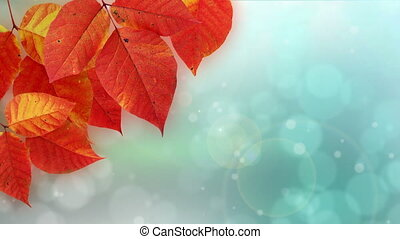 Nature Bokeh dot background