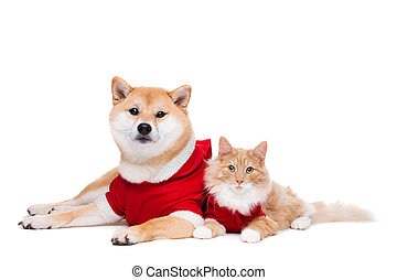 Dog and Cat - Dog and Cat dressed in Christmas clothes in...
