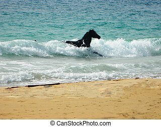 Surfing Horse - A domesticated horse swimming in the...