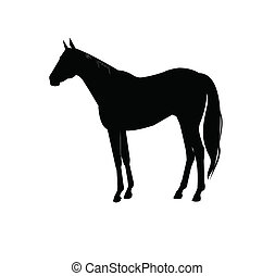 horse silhouette - single horse in outline