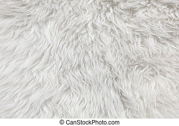 Wool background Detail of sheep fur
