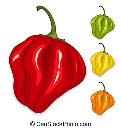 Chili habanero peppers. Isolated vector - Red, yellow, green...