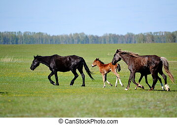 In steppe