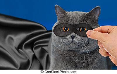super hero cat portrait
