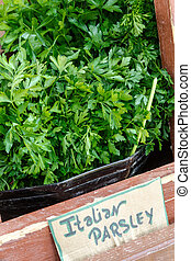 Farmers Market - Bunches of Italian parsley on display for...