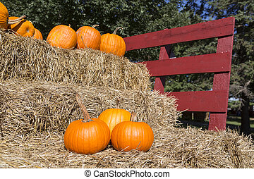 pumpkins on hay - ripe pumpkins on a horse cart with...