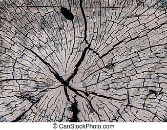 árbol, Tocones, derribado, bosque,...