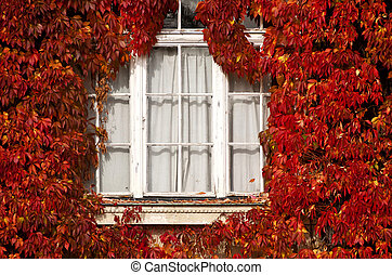 white window framed by autumnal red leaves
