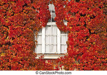 White window and facade covered by red leaves