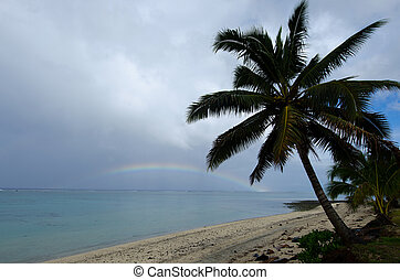 Titikaveka beach in Rarotonga Cook Islands - Coconut palm...