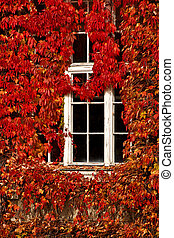 vintage white window and red leaves - old white window...