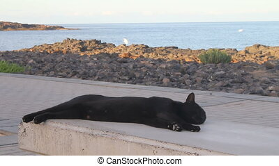 A lazy cat relaxing on a bench - A lazy cat relaxing on a...