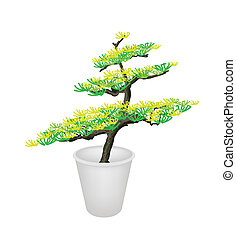 Illustration of Bonsai Tree in A Flower Pot