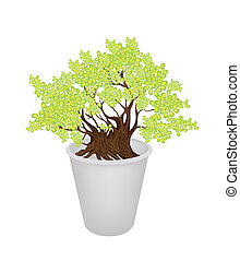 Illustration of Beautiful Bonsai Tree in A Flower Pot - An...