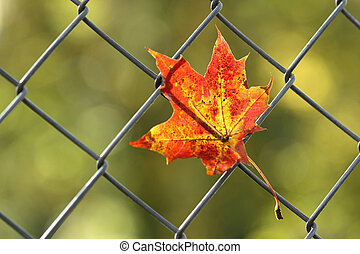 fallen autumn leaf on fence