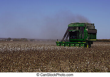 Cotton Harvest - Picking cotton by machine in southern New...