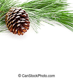 fir tree branch with pinecone on white background