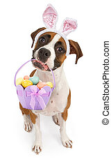 Boxer Dog Carrying Easter Basket - A tri-colored Boxer dog...