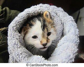 Cozy cat kitten wrapped in a towel