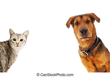 Dog and Cat With Copy Space - An adult large breed dog and a...
