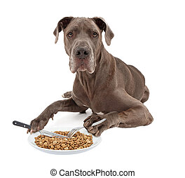 Great Dane Dog Eating Food with Utensils - A blue Great Dane...