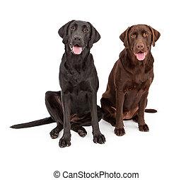 Two Labrador Retriever Dogs Sitting Together - Two Labrador...