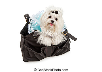 Maltese Dog in a Black Travel Carrier - A Maltese dog...