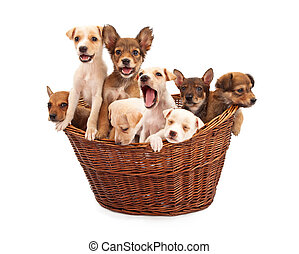 A Basket of Puppies - A litter of eight week old mixed breed...