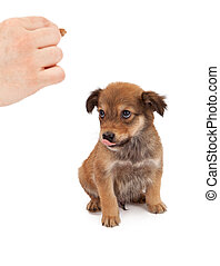 Puppy Obedience Training - An eight week old puppy looking...