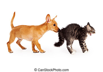 Puppy Sniffing Scared Kitten - A young mixed breed yellow...