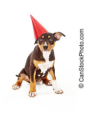 Puppy wearing red party hat