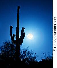 Super Full Moon With Saguaro Cactus in Phoenix Arizona
