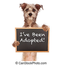 Terrier Mix Dog Holding Adoped Sign - A cute Cairn Terrier...