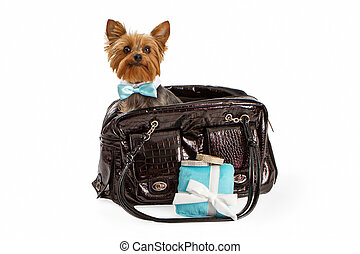 Yorkshire Terrier Going on a Luxury Trip - An adorable...