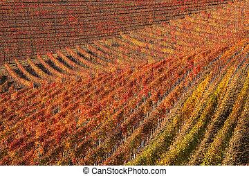 viñas, otoño, piedmont, norteño, Italia