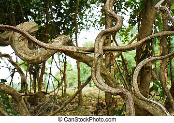 twisted tropical tree roots