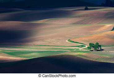 rolling hill and Farm Land, green wheat fields