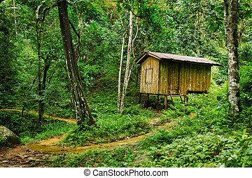Wooden small house in a tropical forest