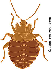 Bedbug - Vector image of red Bedbug on the wihte background