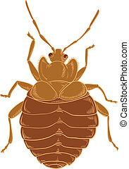 Bedbug - Vector image of red Bedbug on the wihte background