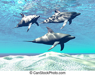 DOLPHINS - Three dolphins swim over a sandy reef.